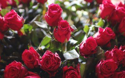 Rekomendasi bunga tanda cinta di hari Valentine